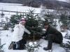 christbaum-pfurtscheller
